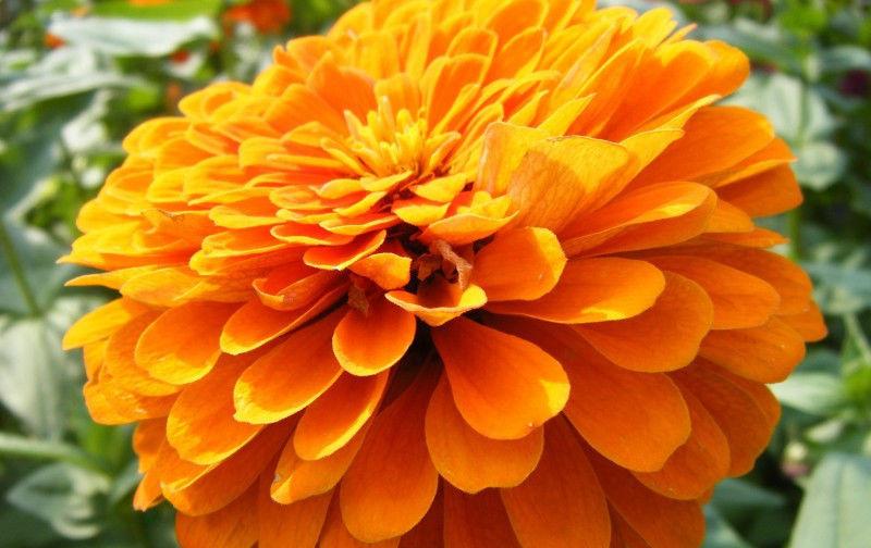 来之不易 步入九月份,缘分与桃花来之不易,真爱十里飘来的四大生肖!
